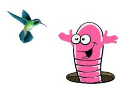 dédé et le colibri